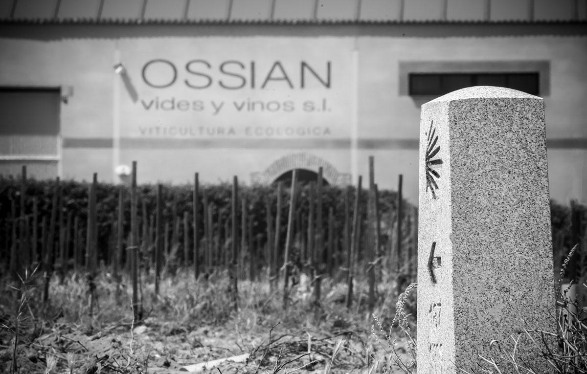 Ossian Bodega